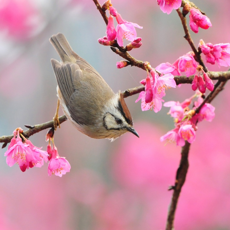 A bird at spring time - new beginnings